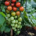 Елена Хлесткина: Вчерашнее понятие ГМО устарело