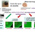 Nutrients: Антоцианы смягчают нейродегенеративные нарушения у модельных животных